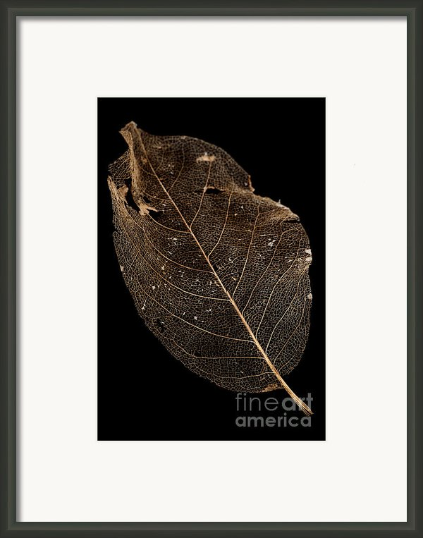 Leaf Lace Framed Print By Anne Gilbert