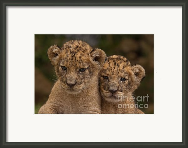 Lean On Me Framed Print By Ashley Vincent
