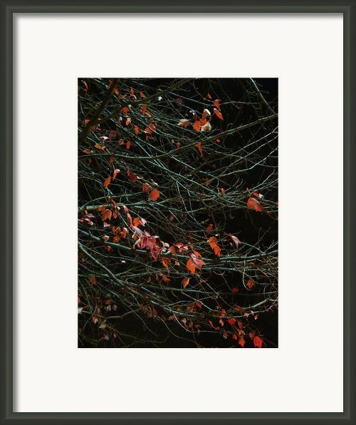 Leaves By Night Framed Print By Guy Ricketts