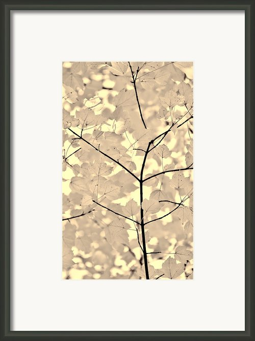 Leaves Fade To Beige Melody Framed Print By Jennie Marie Schell