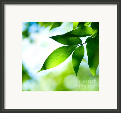 Leaves Green Framed Print By Boon Mee