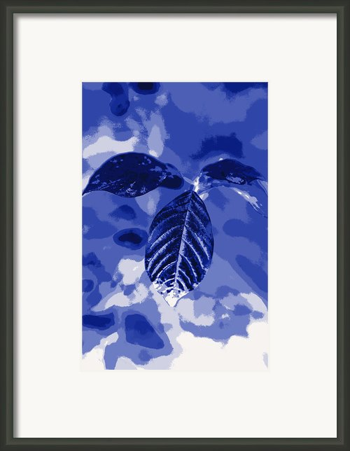 Leaves  In Blue Color Framed Print By Tommy Hammarsten