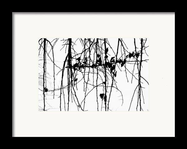 Leaves Framed Print By Susie Dezarn