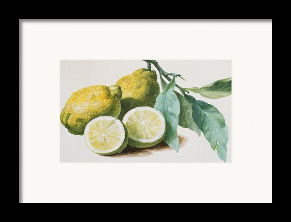 Lemons Framed Print By Pierre Joseph Redoute