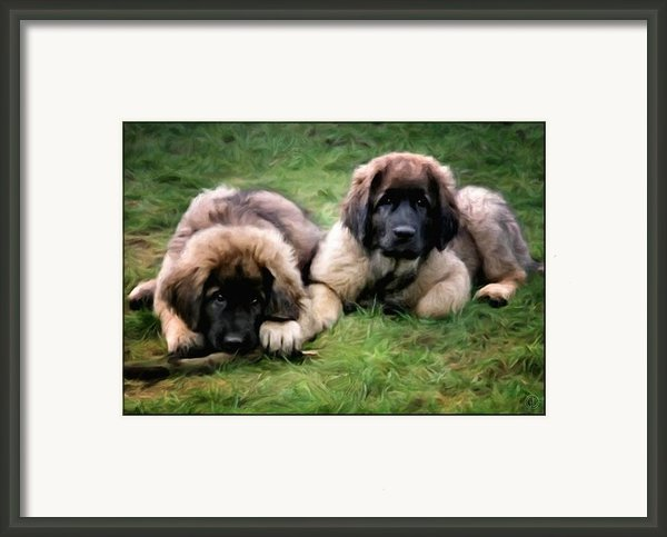 Leonberger Puppies Framed Print By Gun Legler