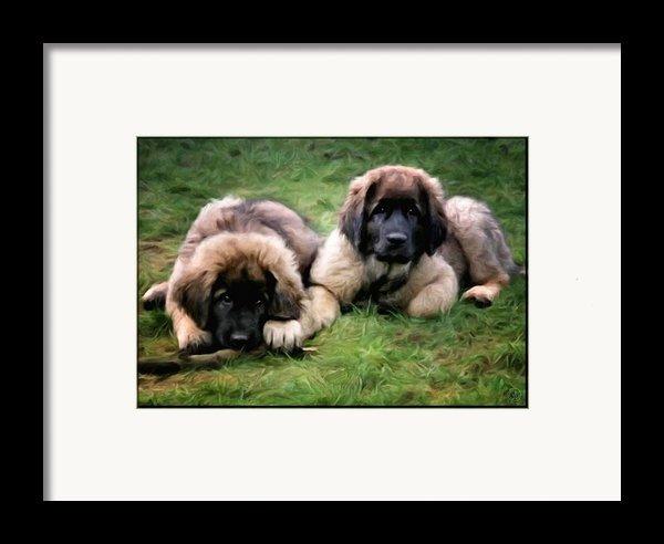 Leonberger Puppies Framed Print By Gun Legler