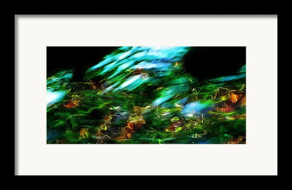 Life On The Streambed Framed Print By Terril Heilman