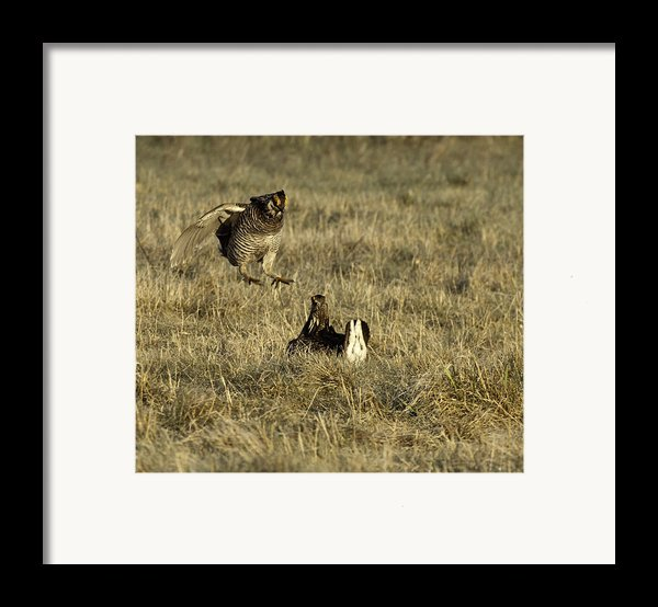 Lift Off Framed Print By Thomas Young