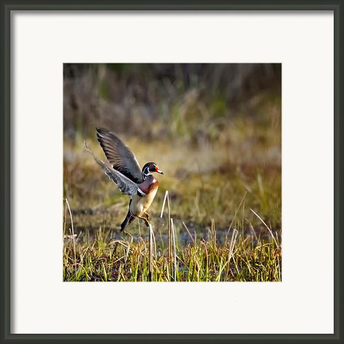 Liftoff Framed Print By Bill  Wakeley