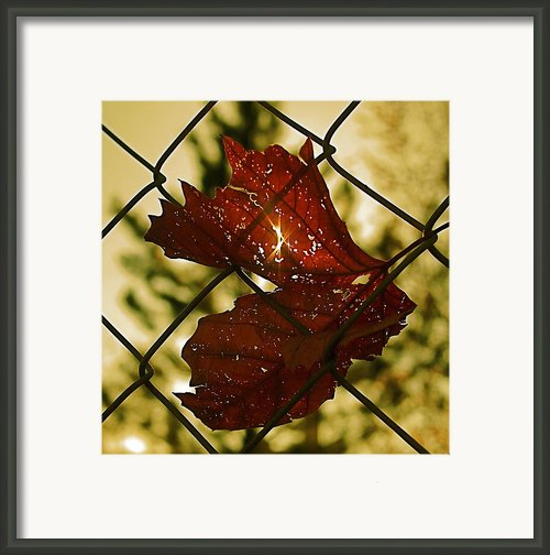 Light Leaf Links Framed Print By Rona Black