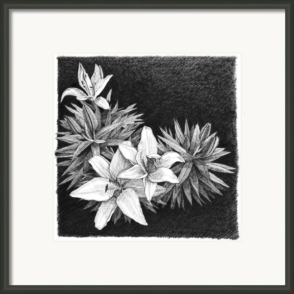 Lilies In Pen And Ink Framed Print By Janet King