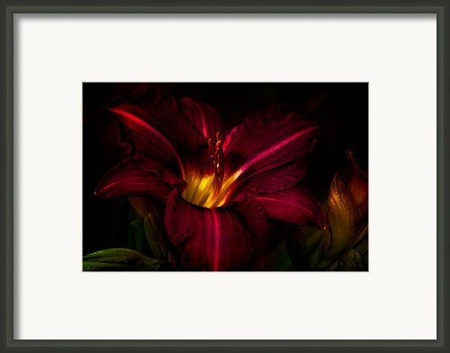 Lily Number Nine Framed Print By Bob Orsillo