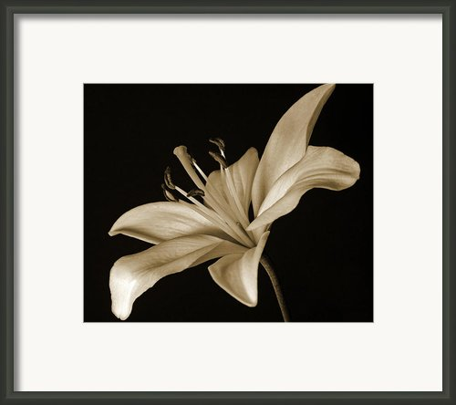 Lily Framed Print By Sandy Keeton