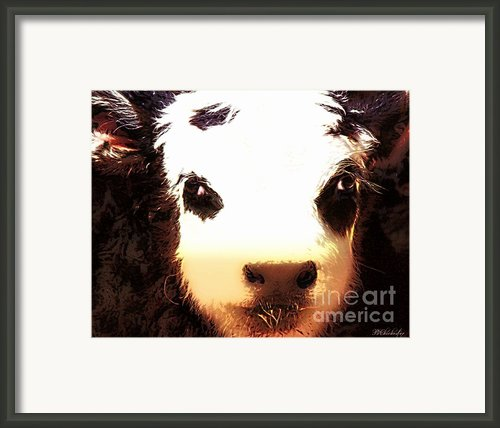 Little Black Baldy Framed Print By Barbara Chichester