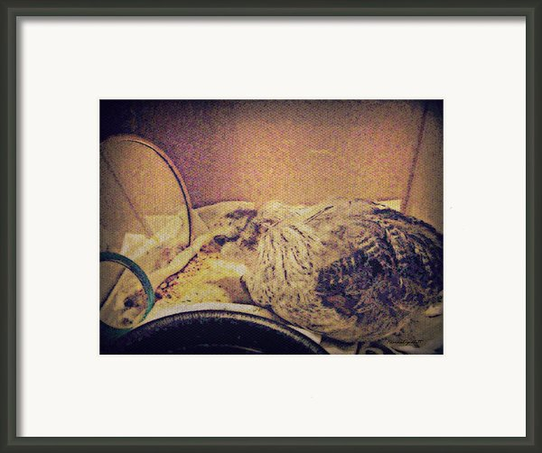 Little Chick Framed Print By Yomamabird Rhonda