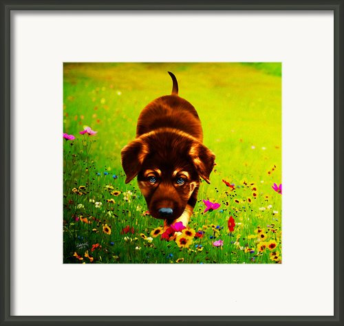 Little Hunter Framed Print By Rebelwolf