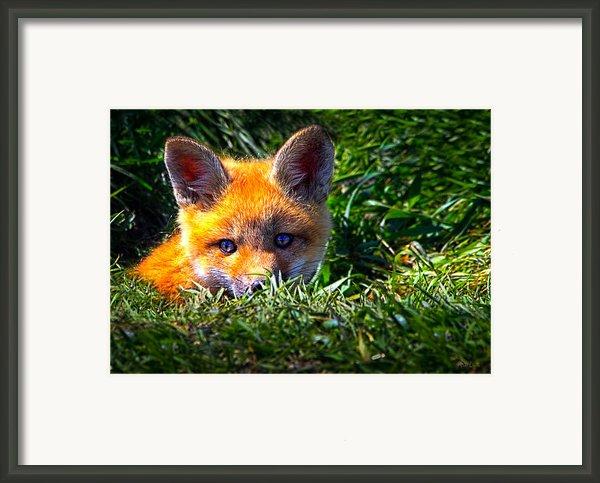 Little Red Fox Framed Print By Bob Orsillo