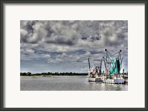 Little Shrimpers   Framed Print By Benanne Stiens
