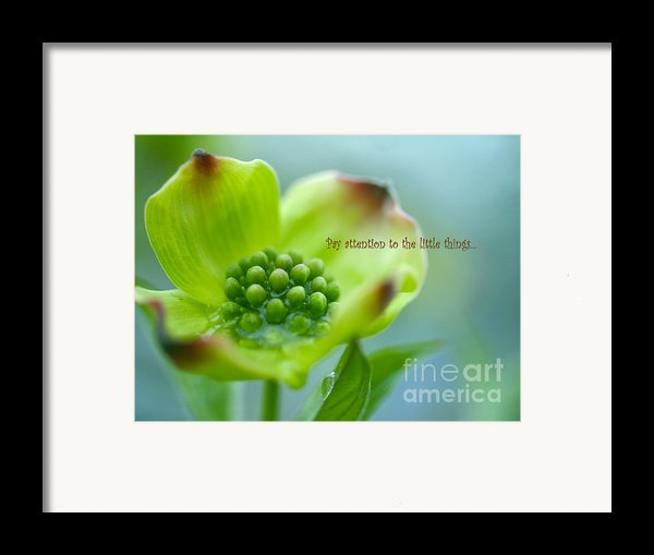 Little Things Framed Print By Irina Wardas