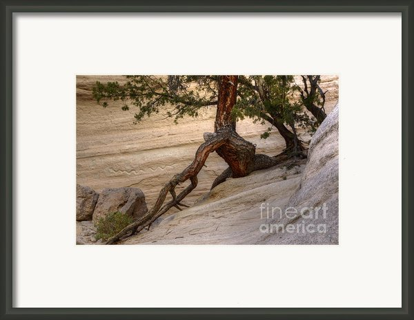 Living Gracefully Framed Print By Bob Christopher