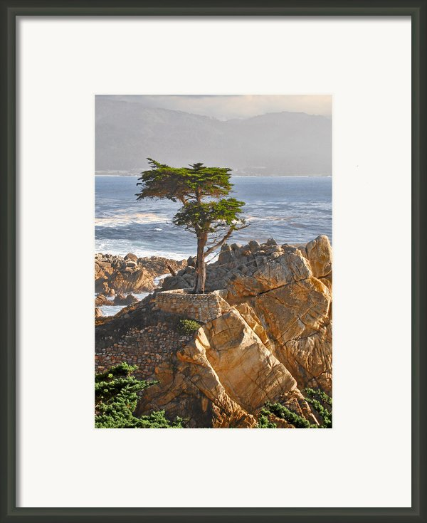 Lone Cypress - The Icon Of Pebble Beach California Framed Print By Christine Till