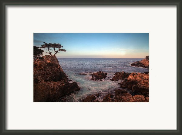 Lone Cyprus Pebble Beach Framed Print By Mike Reid