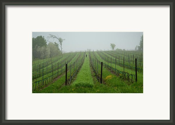 Lone Figure In Vineyard In The Rain On The Mission Peninsula Michigan Framed Print By Mary Lee Dereske
