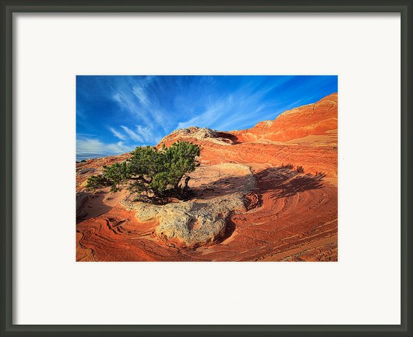 Lone Juniper Framed Print By Inge Johnsson