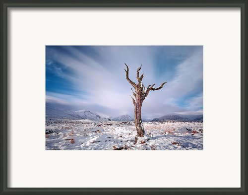 Lone Tree In The Snow Framed Print By Grant Glendinning