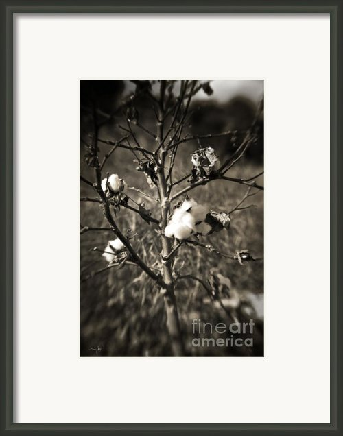 Lonesome Framed Print By Scott Pellegrin