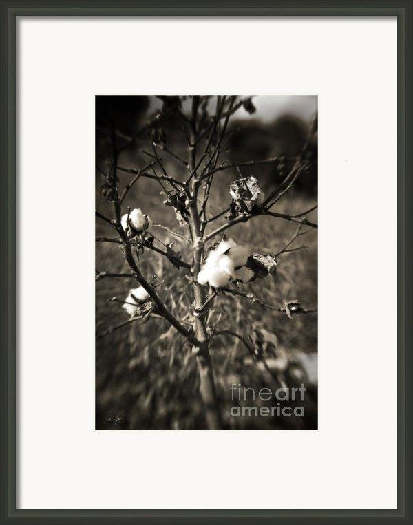 Lonesome Framed Print By Scott Pellegrin
