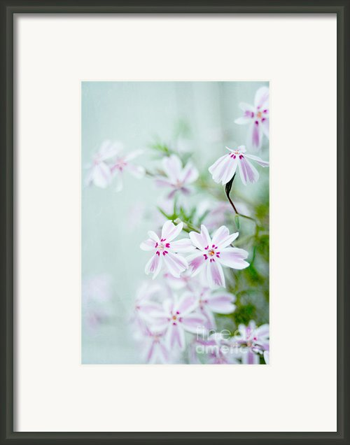 Longing For Spring Framed Print By Iris Lehnhardt