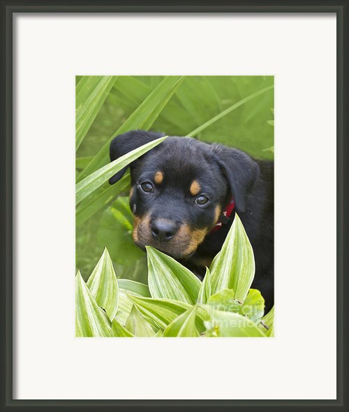 Look For Me Framed Print By Heiko Koehrer-wagner