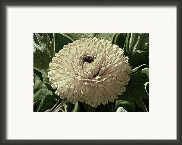 Looking Back Framed Print By Wendy J St Christopher