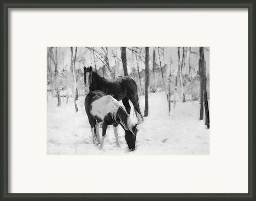 Looking For A Bite Framed Print By Kathy Jennings