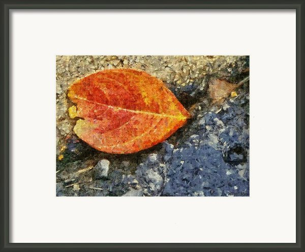 Loose Leaf Framed Print By Jeff Kolker