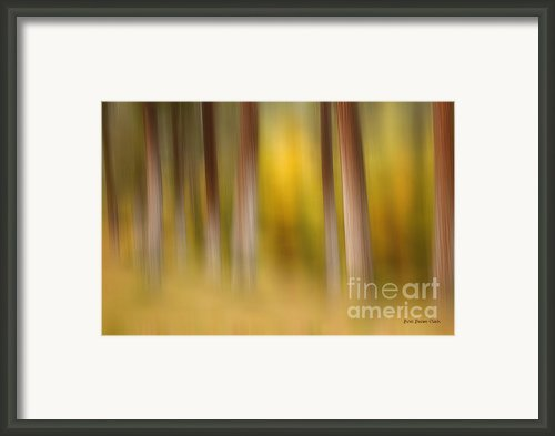Lost In Autumn Framed Print By Reflective Moments  Photography And Digital Art Images