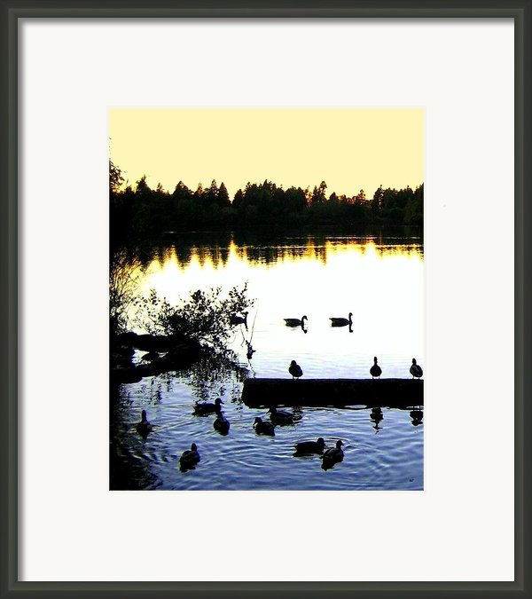 Lost Lagoon At Sundown Framed Print By Will Borden