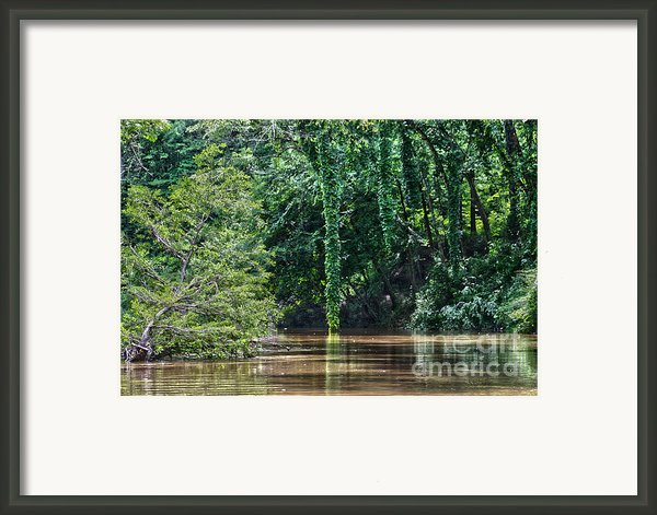 Louisiana Bayou Toro Creek Swamp Framed Print By D Wallace