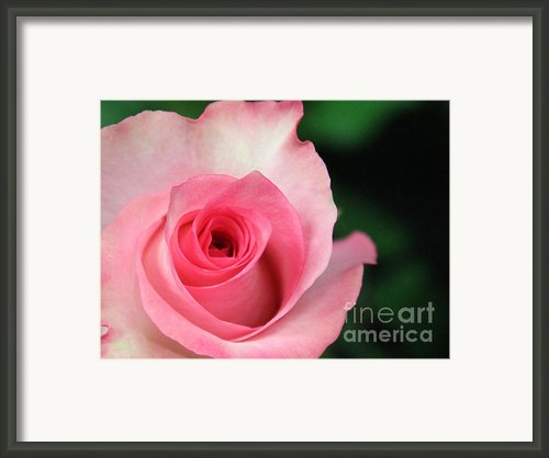 Love At First Sight Framed Print By Sweet Moments Photography