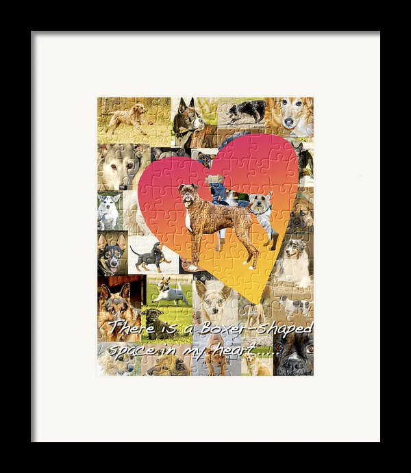 Love Of Boxers Framed Print By Judy Wood