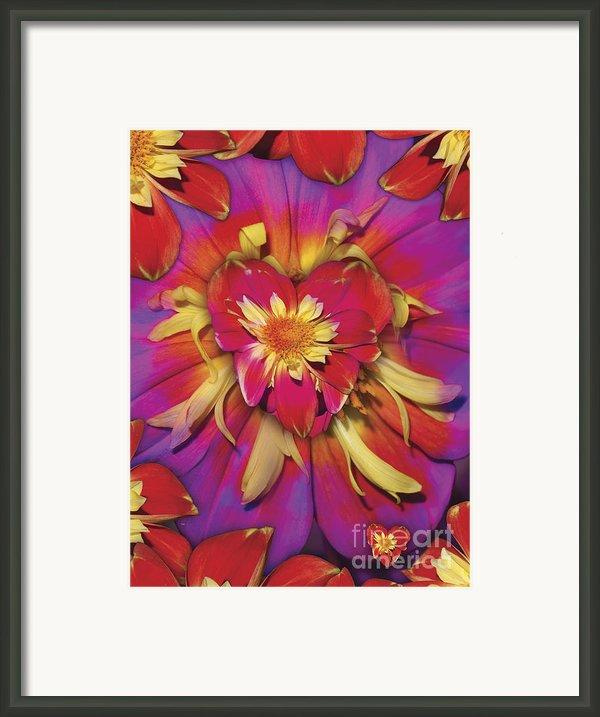 Loveflower Orangered Framed Print By Alixandra Mullins