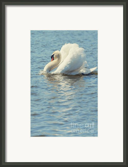 Lovely Bird Framed Print By Svetlana Sewell