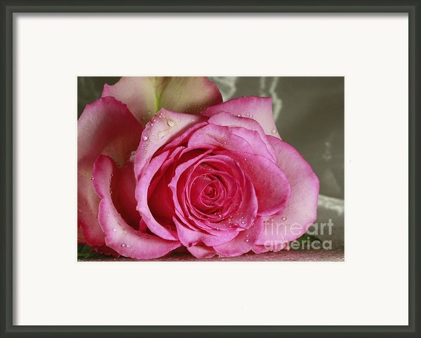 Loves Tender Moments Framed Print By Inspired Nature Photography By Shelley Myke