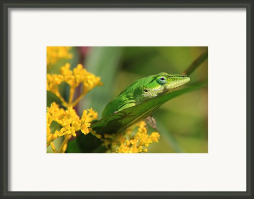 Lurking Framed Print By Leslie Kirk