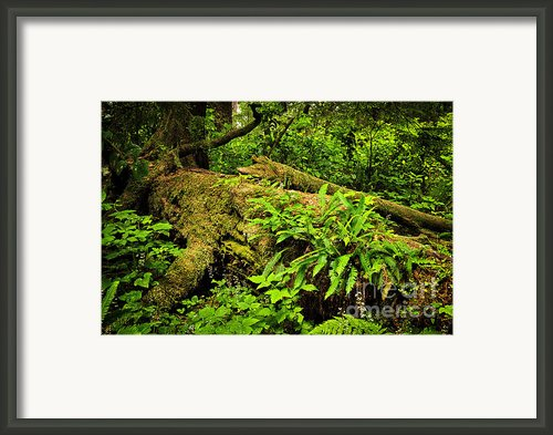Lush Temperate Rainforest Framed Print By Elena Elisseeva