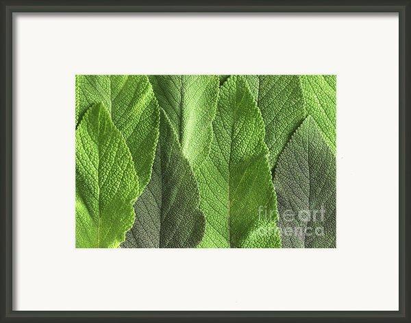 M7500790 - Sage Leaves Framed Print By Spl