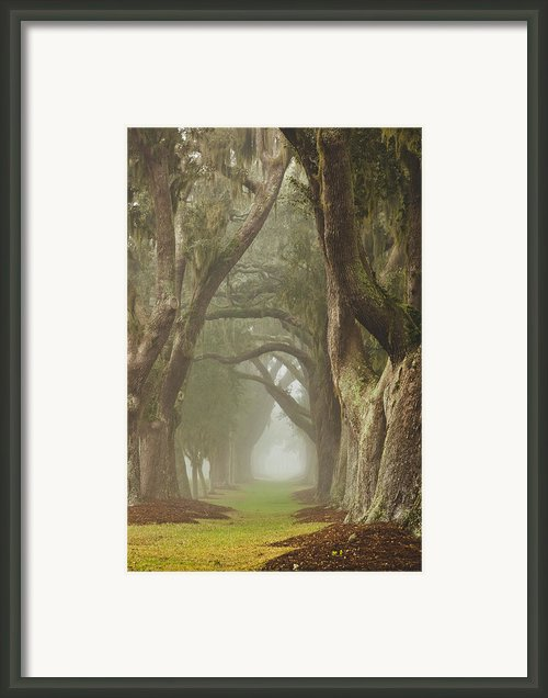 Magic Forest Framed Print By Barbara Marie Kraus