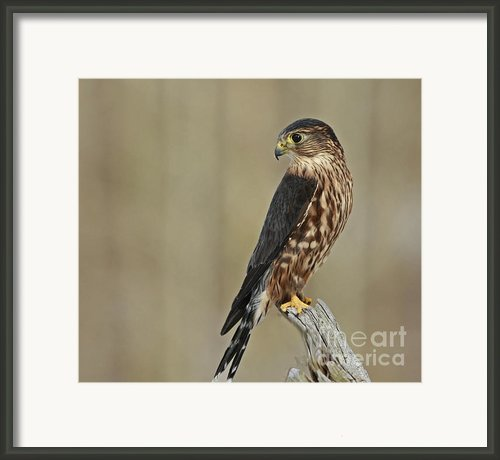 Magical Moments With Merlin Framed Print By Inspired Nature Photography By Shelley Myke