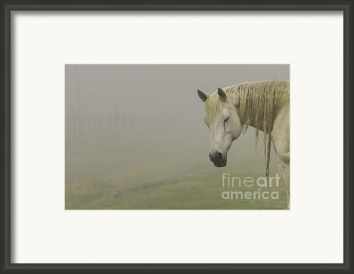 Magical White Horse Framed Print By Cindy Bryant